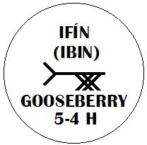 Ifin - Gooseberry Ogham